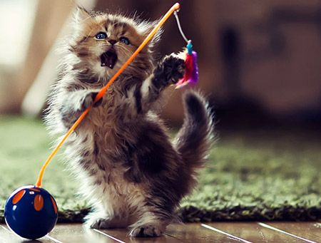 cat-toys-banner