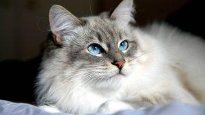 اجتماعی کردن گربههای بالغ