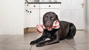 کدام استخوان ها برای سگ ها بی خطر هستند؟