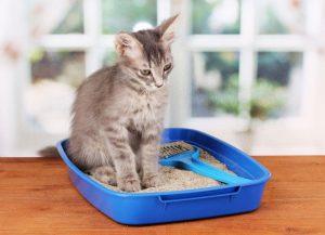 یبوست و مگاکولون در گربه ها