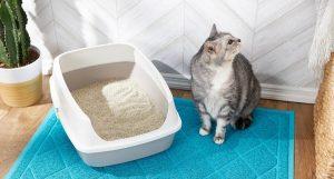 6 دلیل که گربه شما بیرون از جعبه توالت خود دستشویی می کند