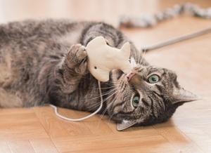 هشت روش غافلگیر کننده برای گفتن « دوستت دارم » به زبان گربه ای
