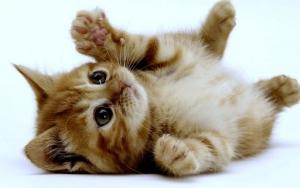 چگونه خلقیات یک گربه را بفهمیم؟