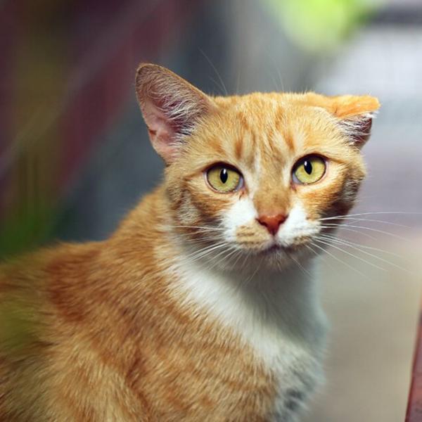 درمان آرتروز در گربه ها