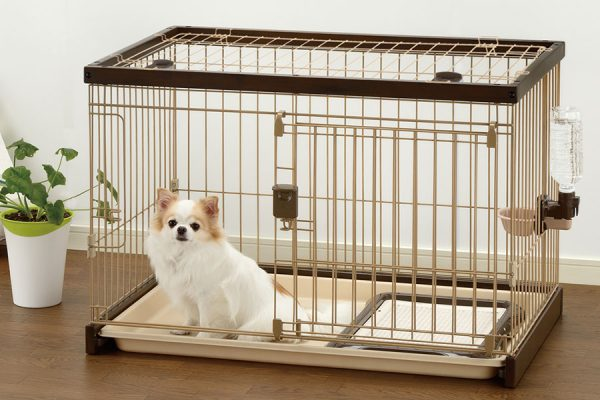 آموزش استفاده از جعبه به سگ