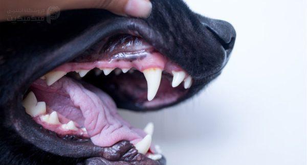 لثه های کمرنگ در سگ ها نشانۀ چیست؟